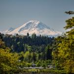 Mt Rainier through the trees