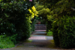 Bushes and trees cover a walkway outside Mary Gates Hall