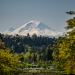 Mt Rainier through the trees